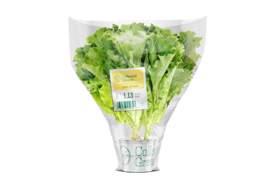 Salatetiketten